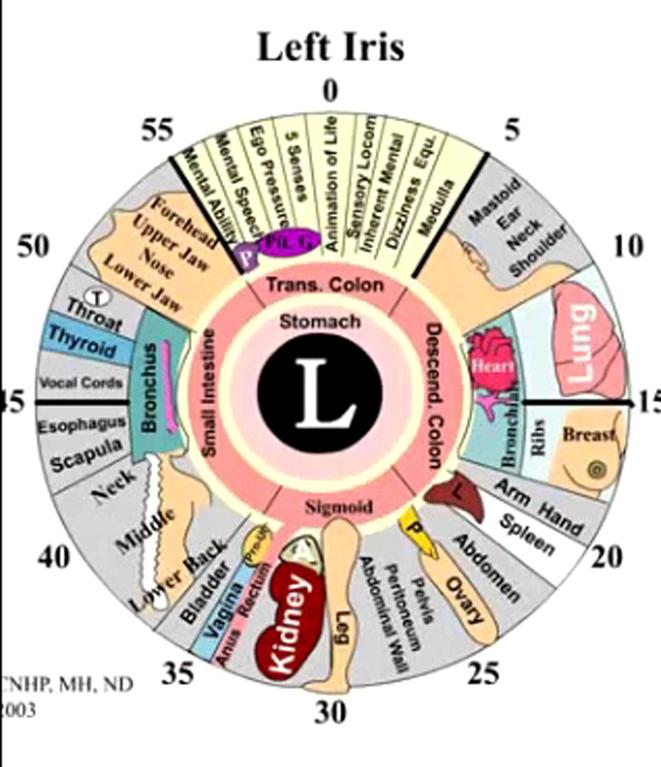 Iridology Chart Left Eye Rebellions