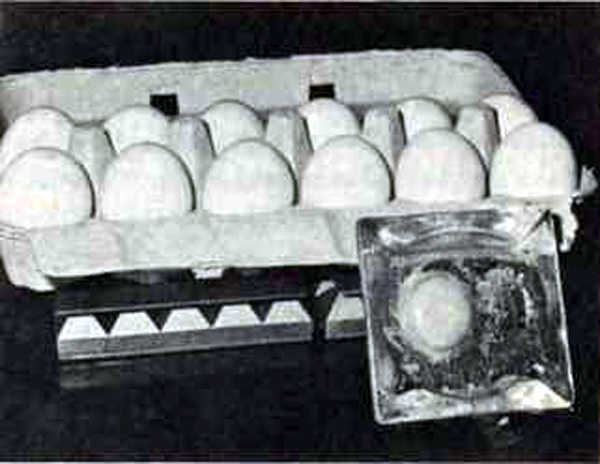 MUmmified egg and dozen eggs sitting on pyramid energizer from Les Brown